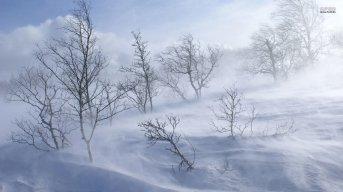 snow-winter-storm-wind-tree
